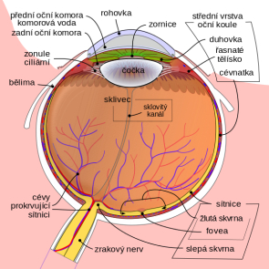 Nemoci oční sítnice