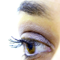 Cyklus růstu očních řas