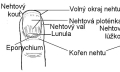 Co znamenají hrbolaté nehty