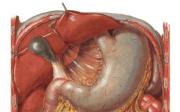 Anatomie břišní dutiny